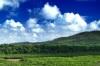 うきうきウッキンを育む原生林